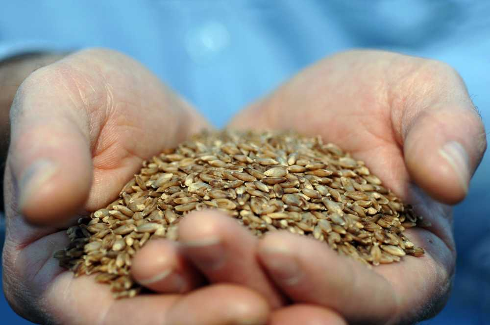 Online grain passports moves a step forward as scheme widely favoured