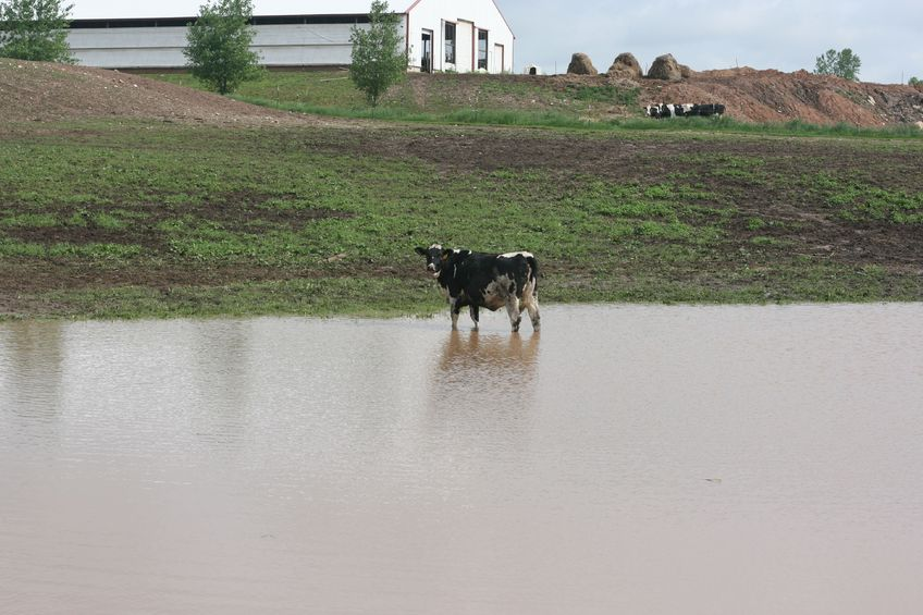 Third of vets know of farmers who have lost livestock due to flooding, survey reveals