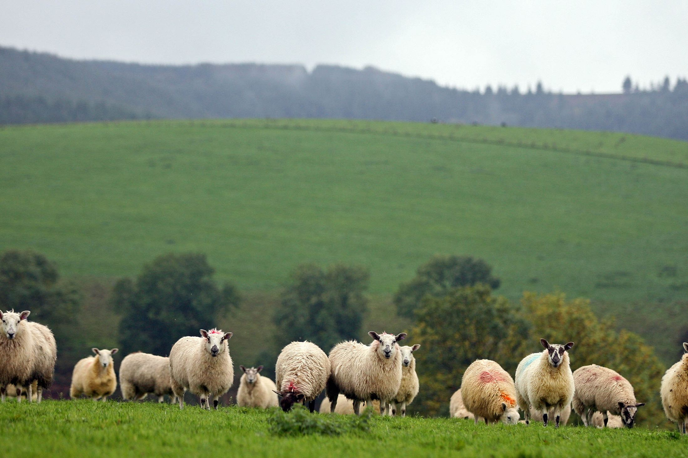 90% of Welsh farmers to receive Basic Payment Scheme payments on first day  - FarmingUK News