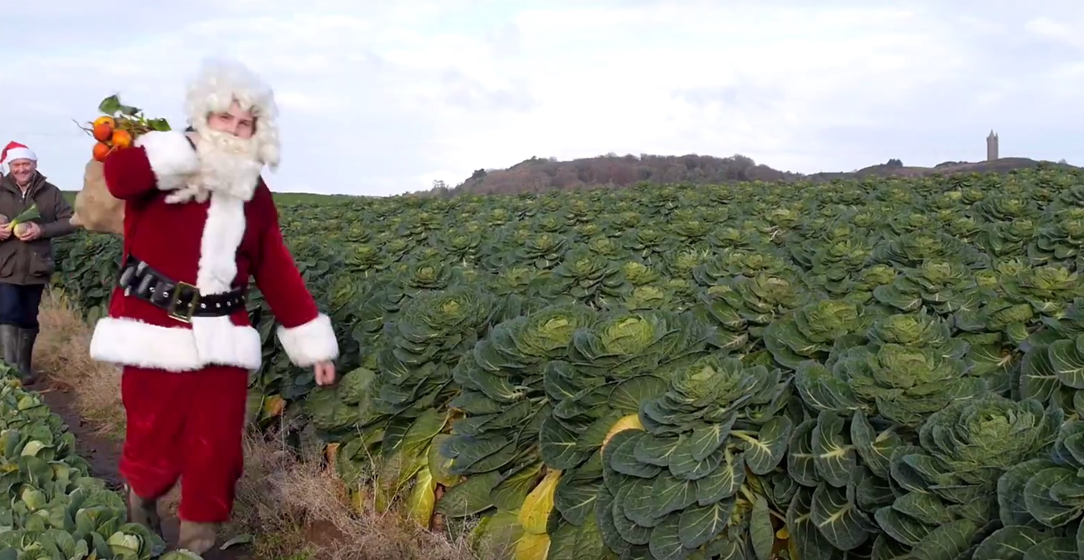 Northern Ireland's vegetable growers feel festive with 'buy local' video