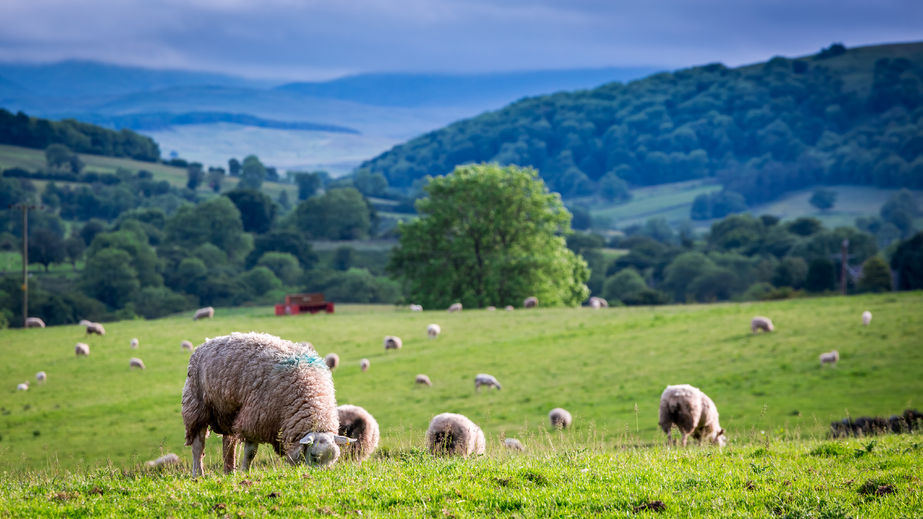 25-year Food and Farming Plan 'must unlock rural potential or risk severely harming it'