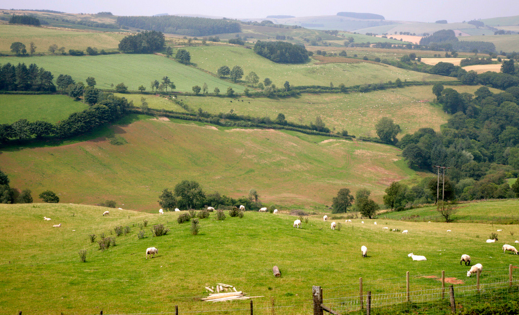 Welsh farmers relying heavily on subsidy payments, according to new survey
