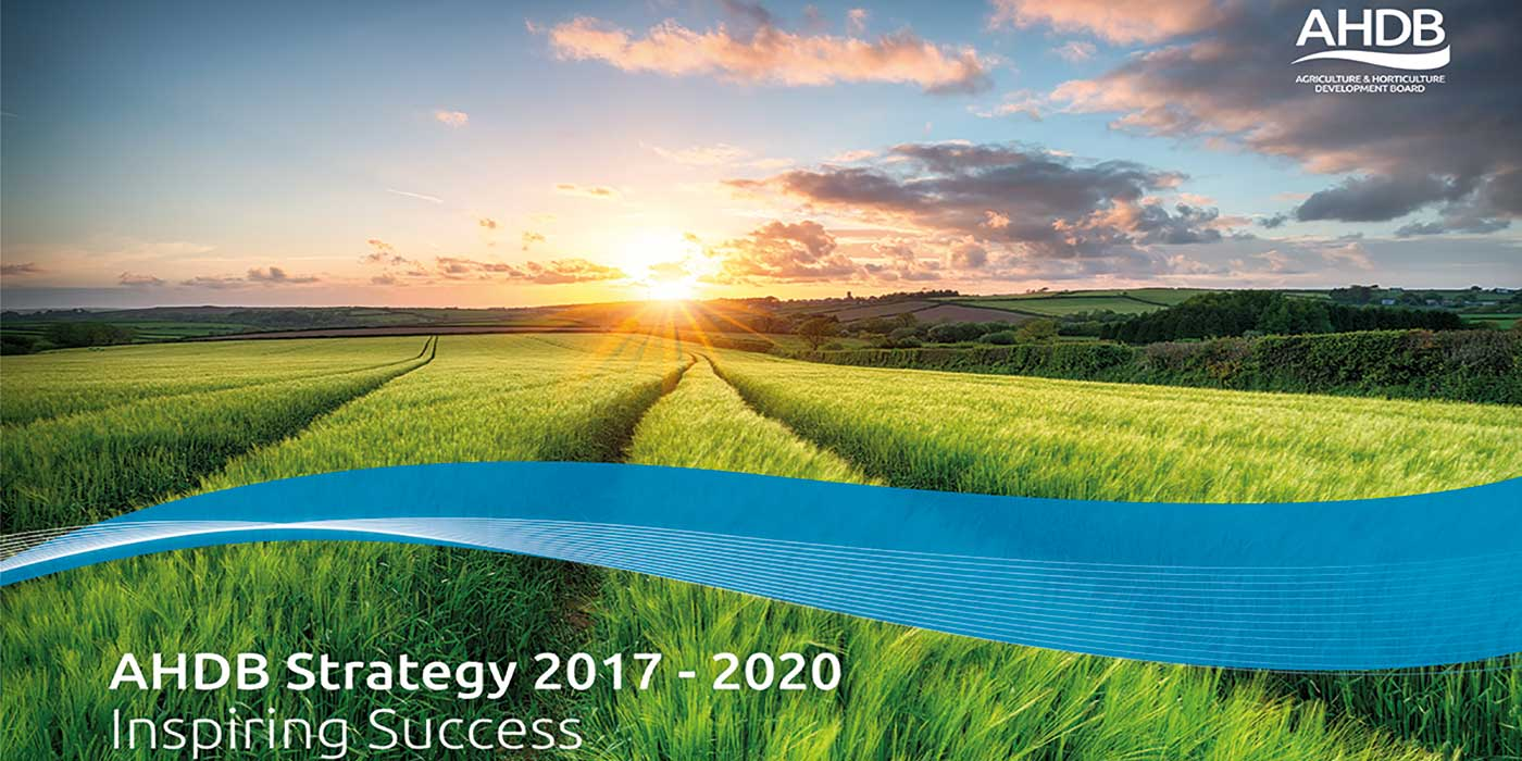 AHDB Beef & Lamb strategy to be discussed at levy payer events