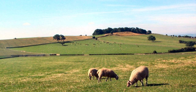 'Predatory' man ordered to pay back £130,000 from sheep rustling earnings