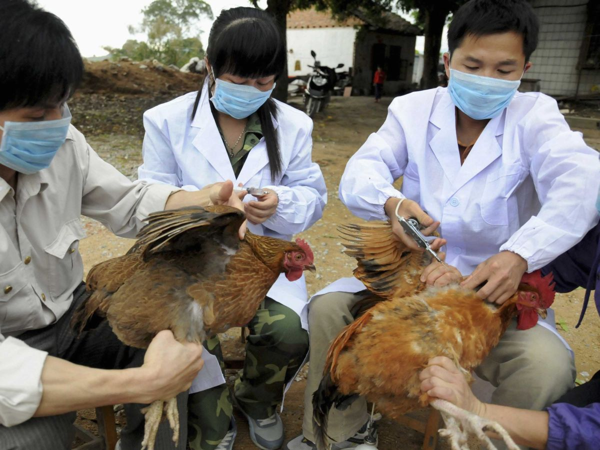 UK set to join list of countries China has banned poultry imports from