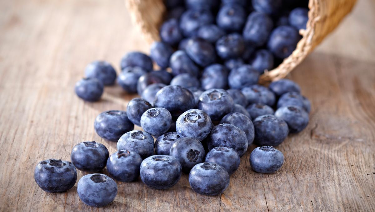 The amount of blueberries grown in Scotland has increased by 10 per cent in the last year