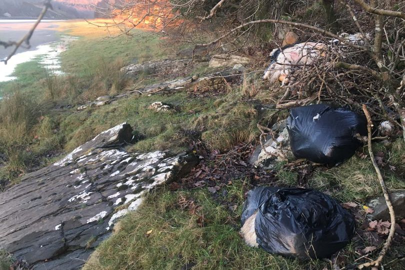 Twenty illegally butchered sheep found dumped at beauty spot in Wales