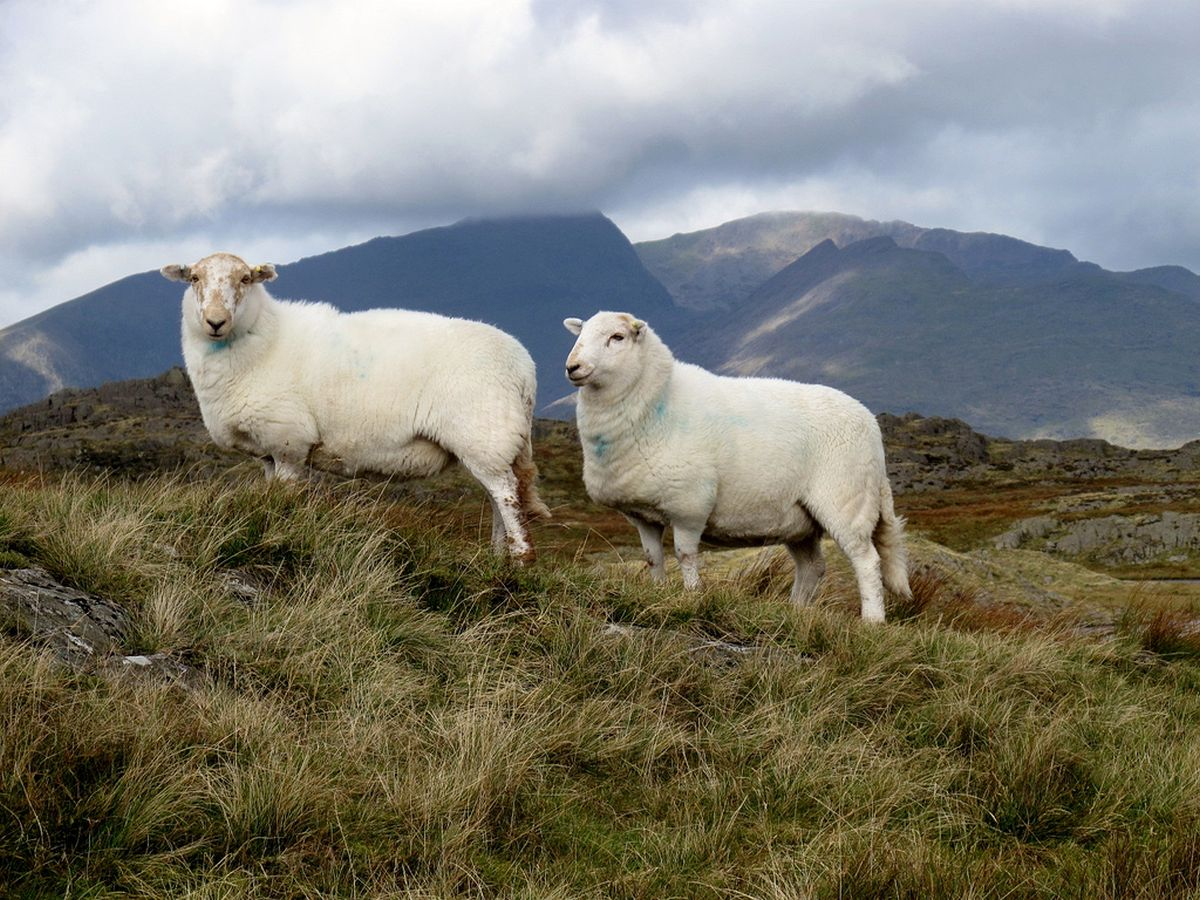 Welsh meat industry urged to show 'greatest resilience, agility and adaptability' in likely volatile year