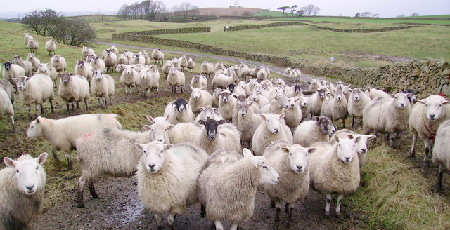 Police said the livestock were herded into a water-filled dyke and were killed overnight (Stock photo)