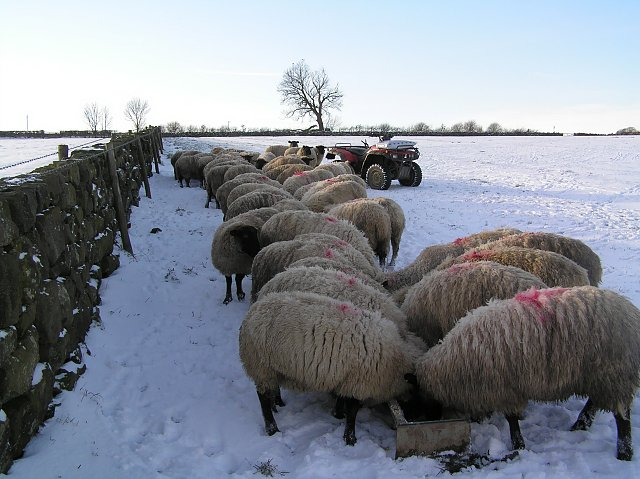 Rural areas of the UK are bracing for snow