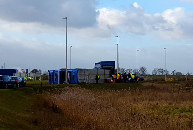 Twenty pigs die after livestock lorry overturns on A16