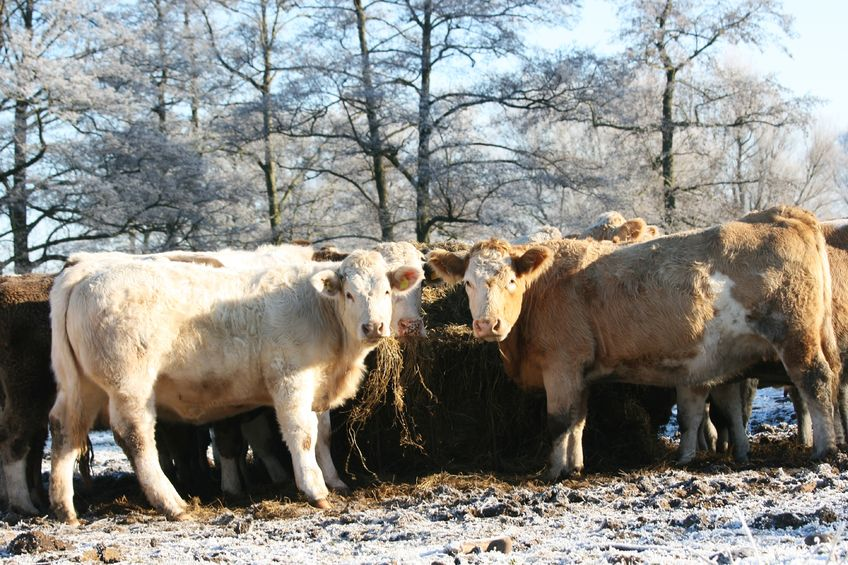 New incidents of bovine TB in Wales at a 'ten year low', according to Chief Vet