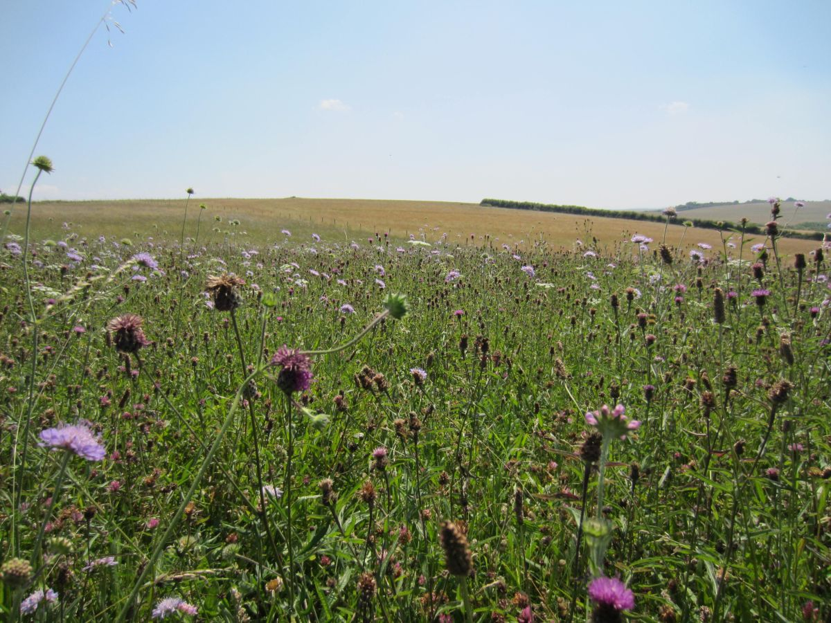 Increasing biodiversity in farmland is a major challenge and opportunity for the farming industry