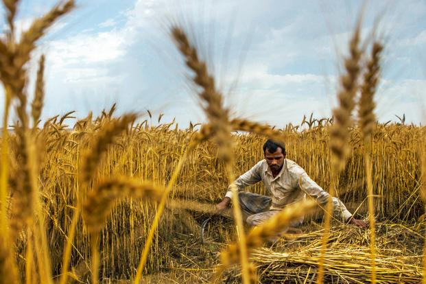 Scientists call on British cooling businesses to help Indian farmers' incomes
