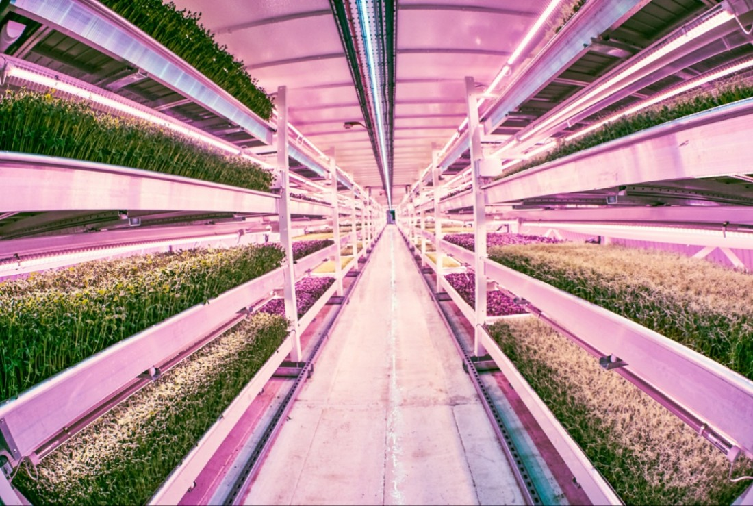 Urban farming 'booming' worldwide but local factors 'hold it back'