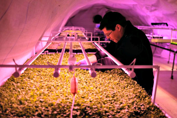 London WWII bomb shelter which produces crops to launch first retail range