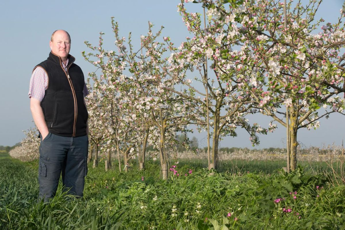 Making agroforestry fit: The importance of planning an end crop