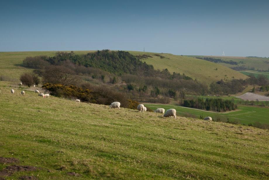 19 sheep stolen in County Antrim, Northern Ireland