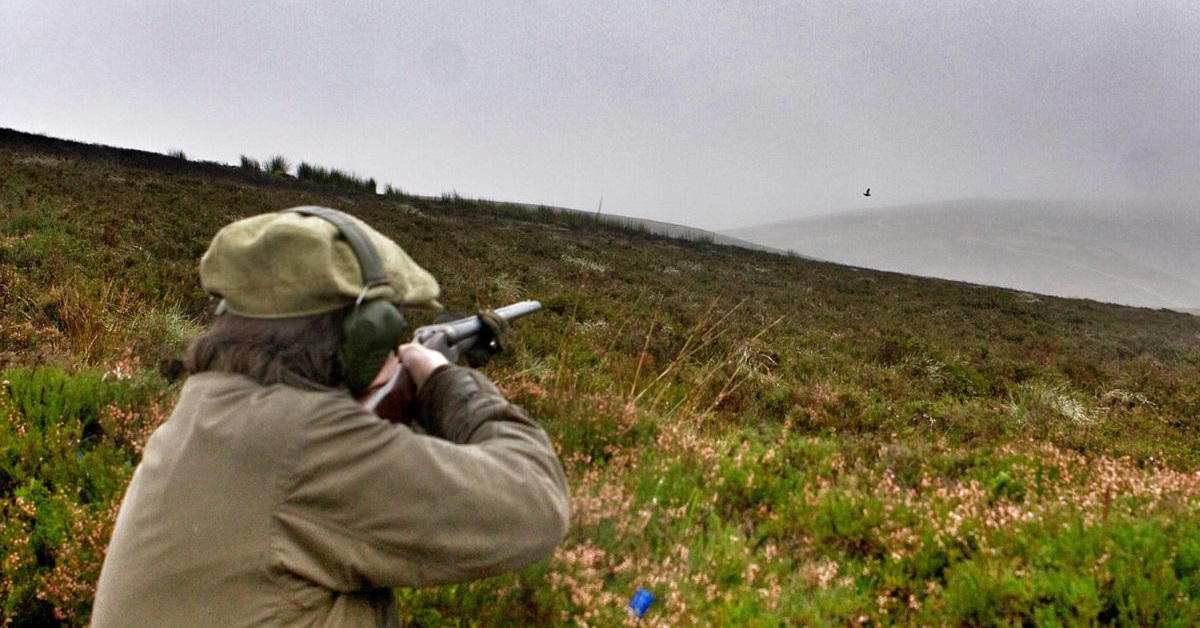 Natural Resources Wales launches review into use of firearms on land it manages