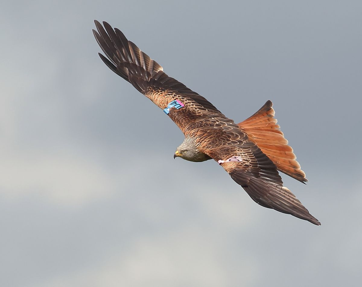 Rural crime: Police warn about bird of prey poisoning in North Yorkshire