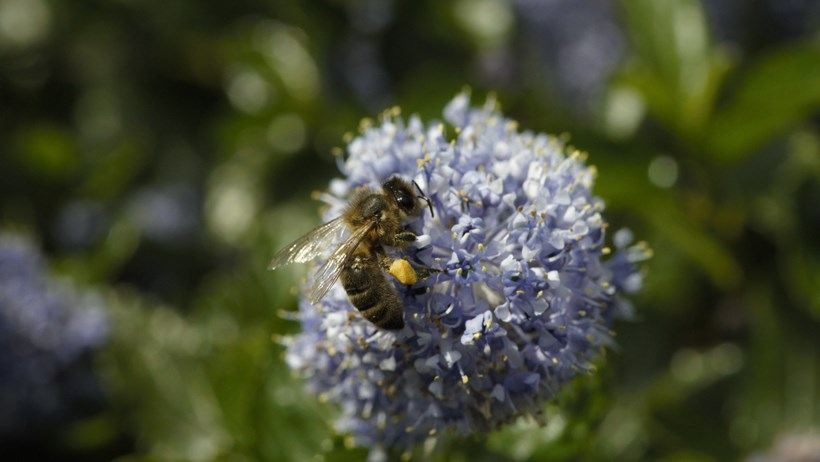 New Tesco scheme gets endangered bees buzzing again