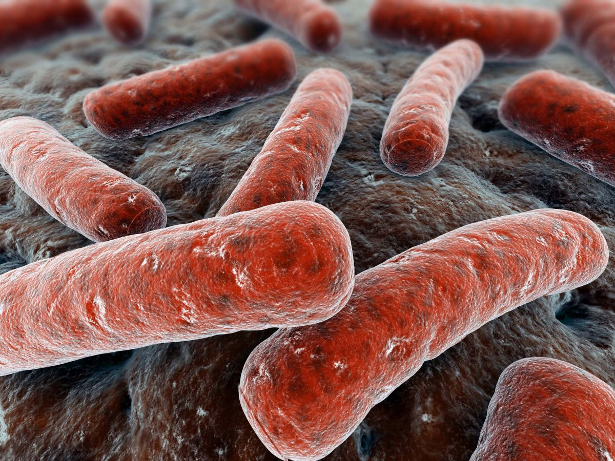 New treatment for TB to be developed using compounds derived from bacterium in soil