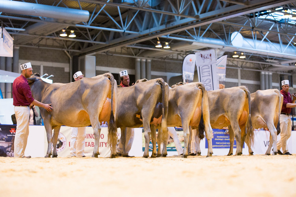 Royal Association of British Dairy Farmers drops plans for national dairy show
