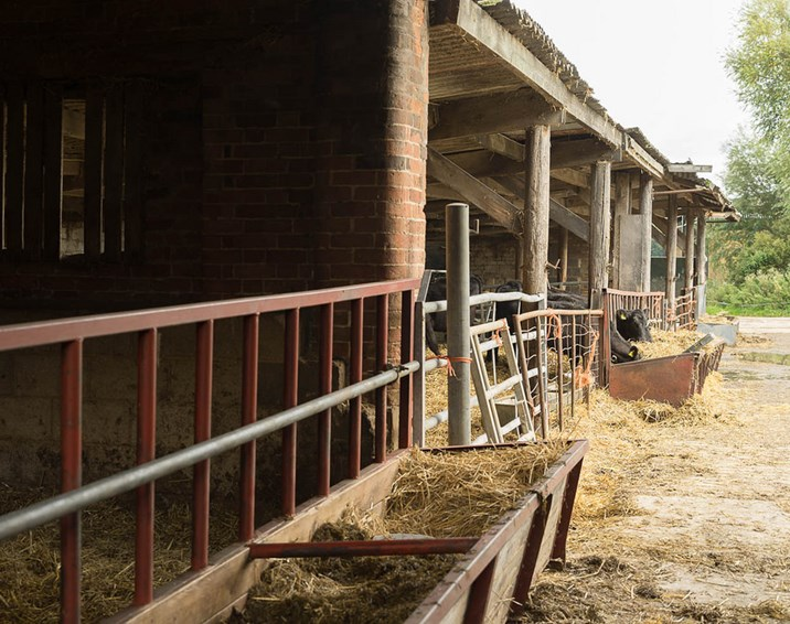 Field lab cuts antibiotic use on organic dairy farm by 24 per cent, saving farmers money and milk