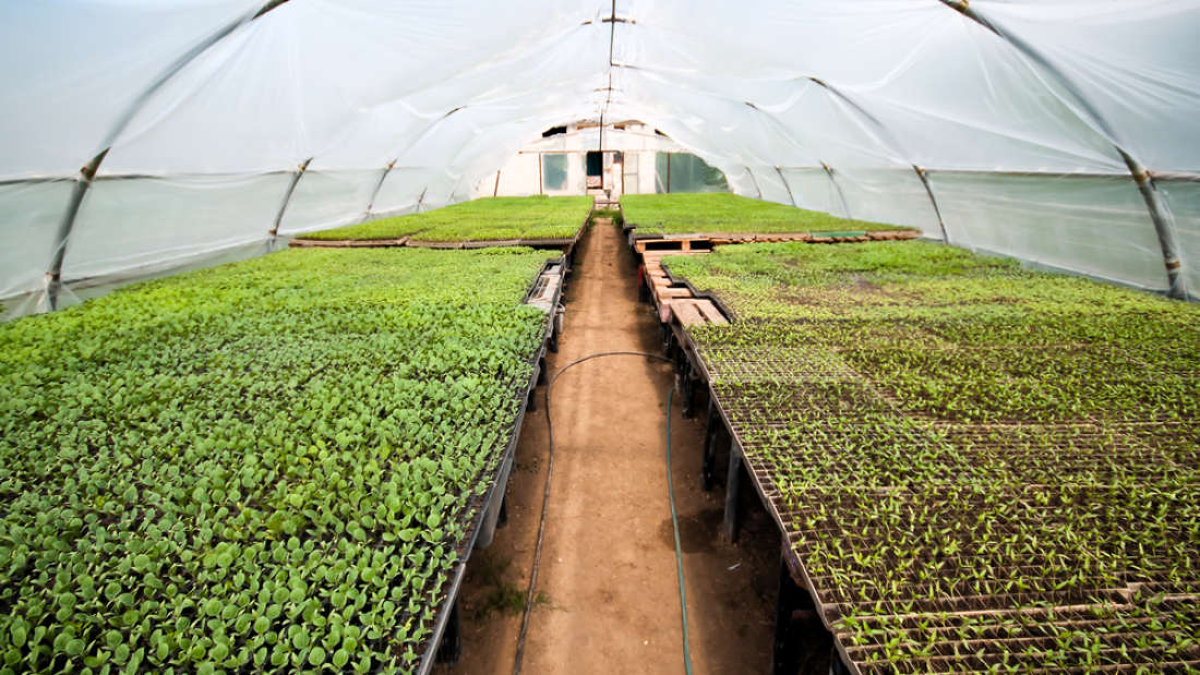 Study suggests organic farming may have a bigger environmental impact than previously thought