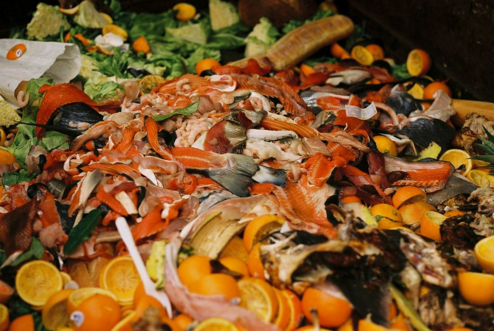 Tesco launches 'food waste hotline' to help growers pinpoint food waste hotspots