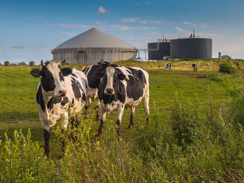 Anaerobic digestion industry to set out plans for UK to establish itself as global leader