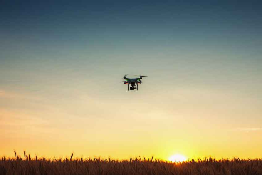 An eye in the sky to tackle fruit fly: Scientists use drones to monitor a serious threat to crops
