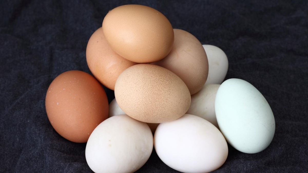 Scientists to use low-cost manufacturing of new animal medicines using chicken eggs