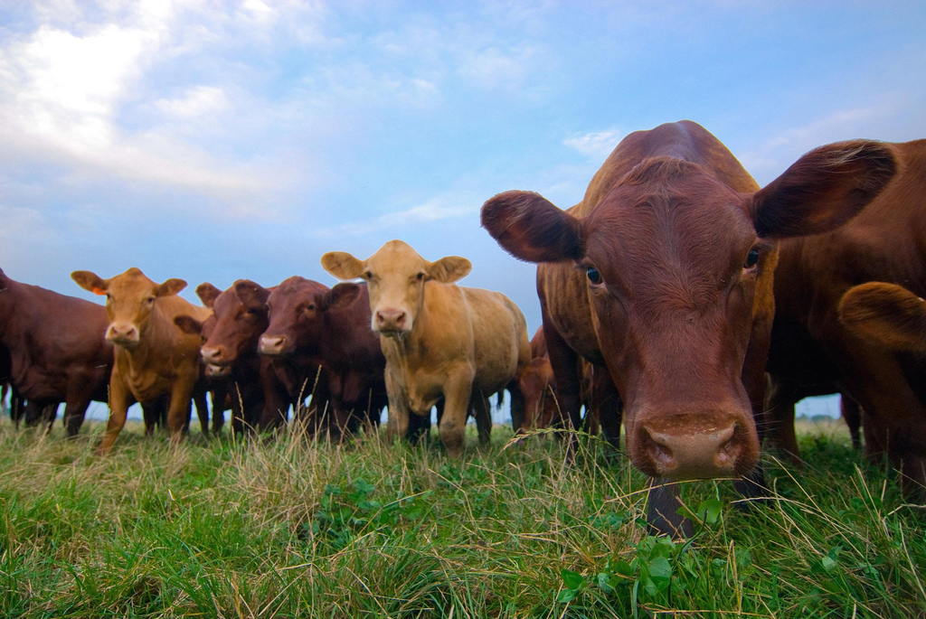 Plan grazing to make the most from grass, beef producers urged