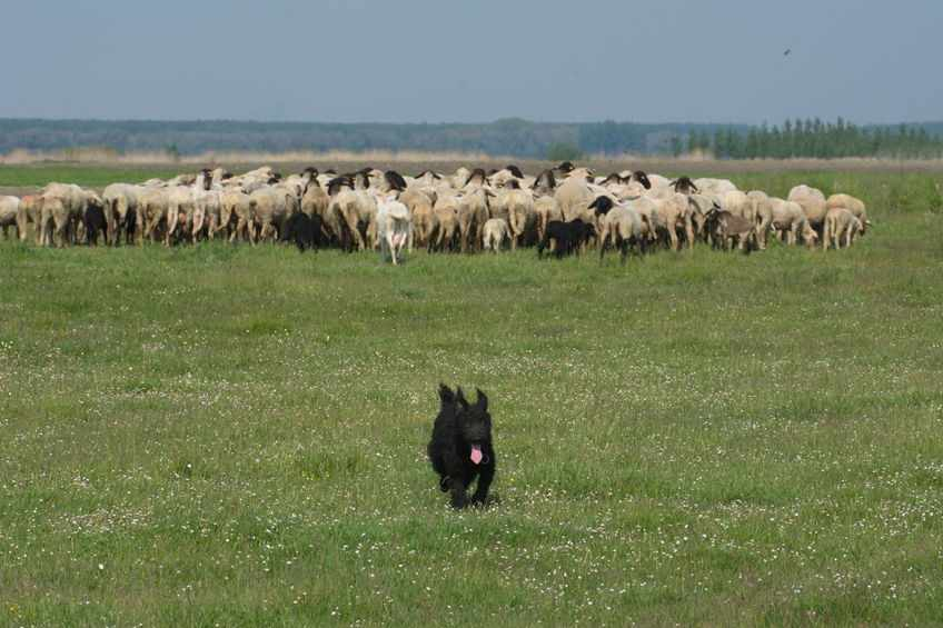 Survey launched as concern continues over dog attacks on sheep