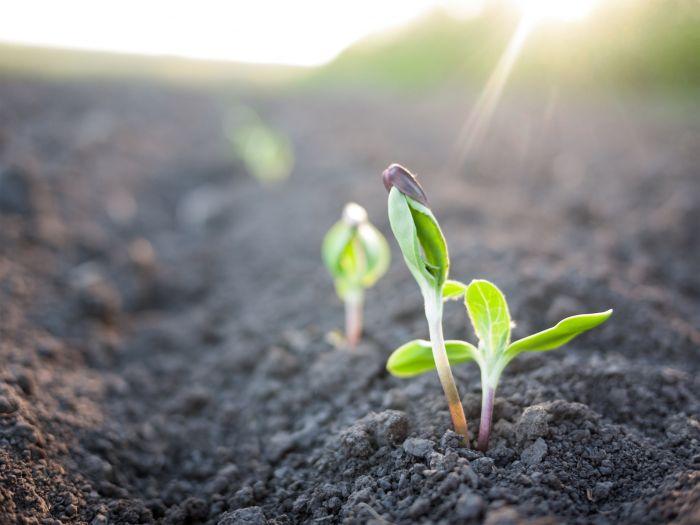 Monitor Farm network explores biostimulant benefits