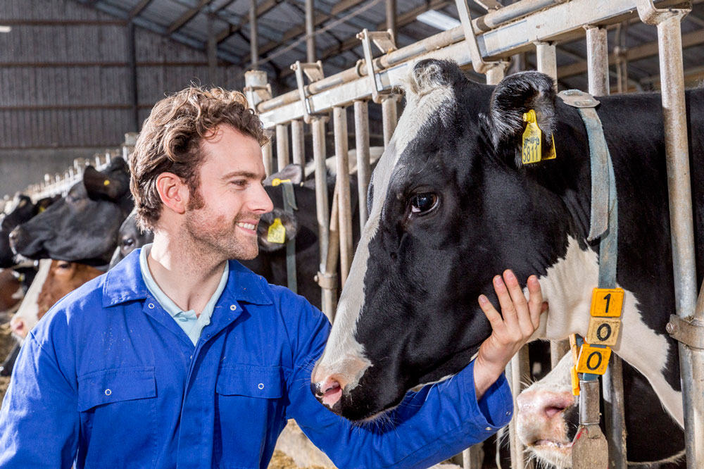 How to manage a healthy transition to maximise milk yields
