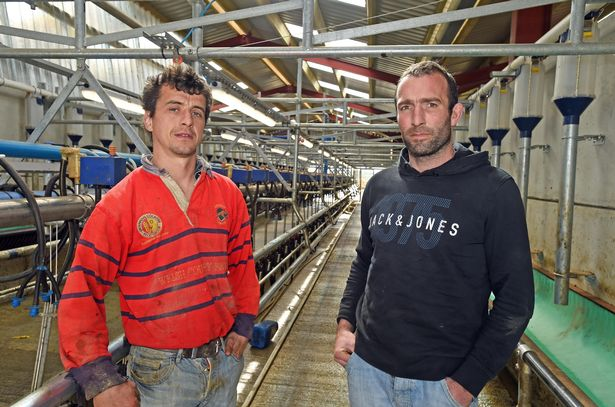 Anglesey farmers 'let down' as council reject £3m dairy project