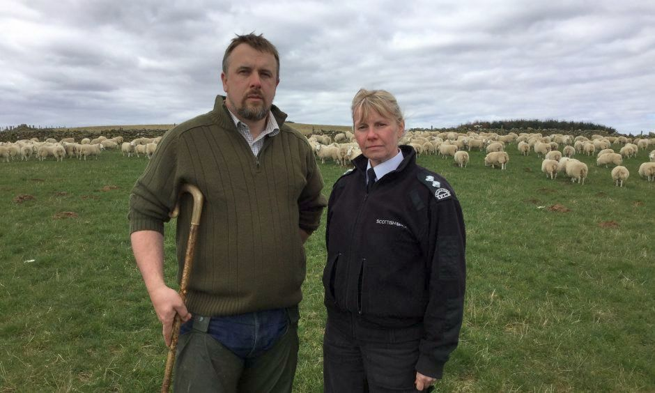 'Sheep-wise' campaign launched to educate dog walkers on sheep worrying