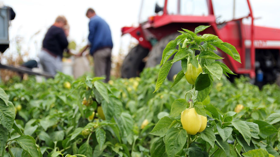 MPs back call for farm migrant labour scheme post-Brexit
