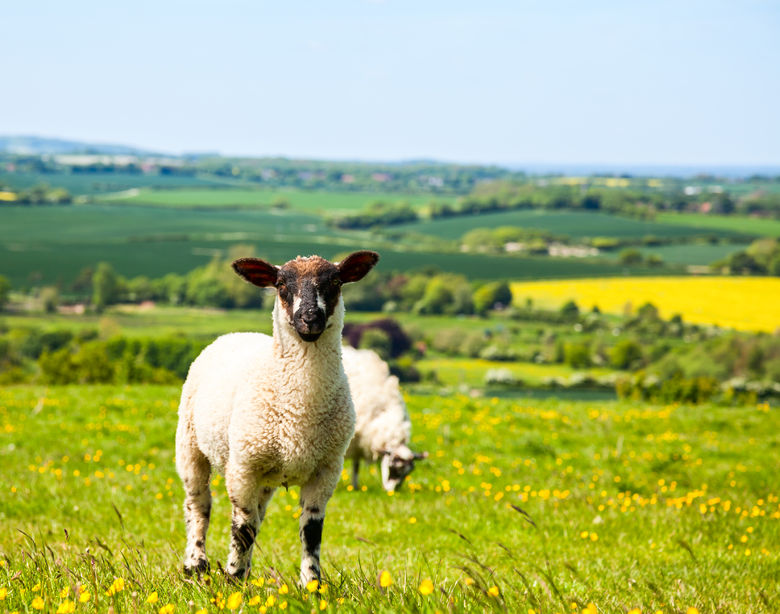 Boost to British farmers as UK imports substantially less lamb