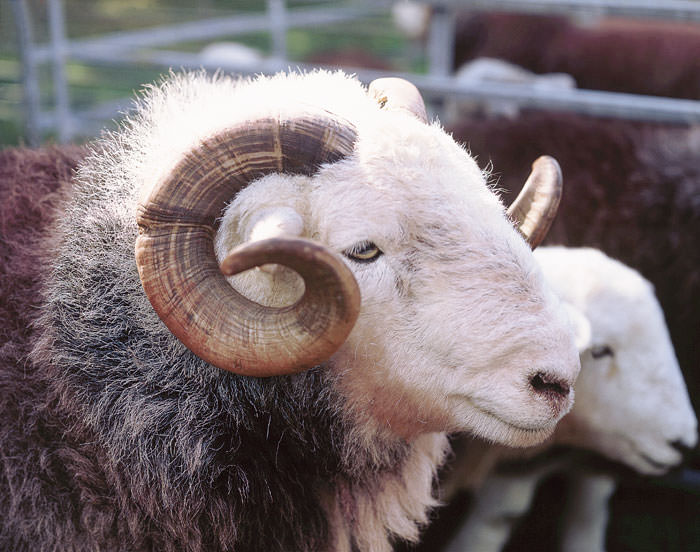 'Disturbing incidents' prompt warnings for dog owners during lambing season