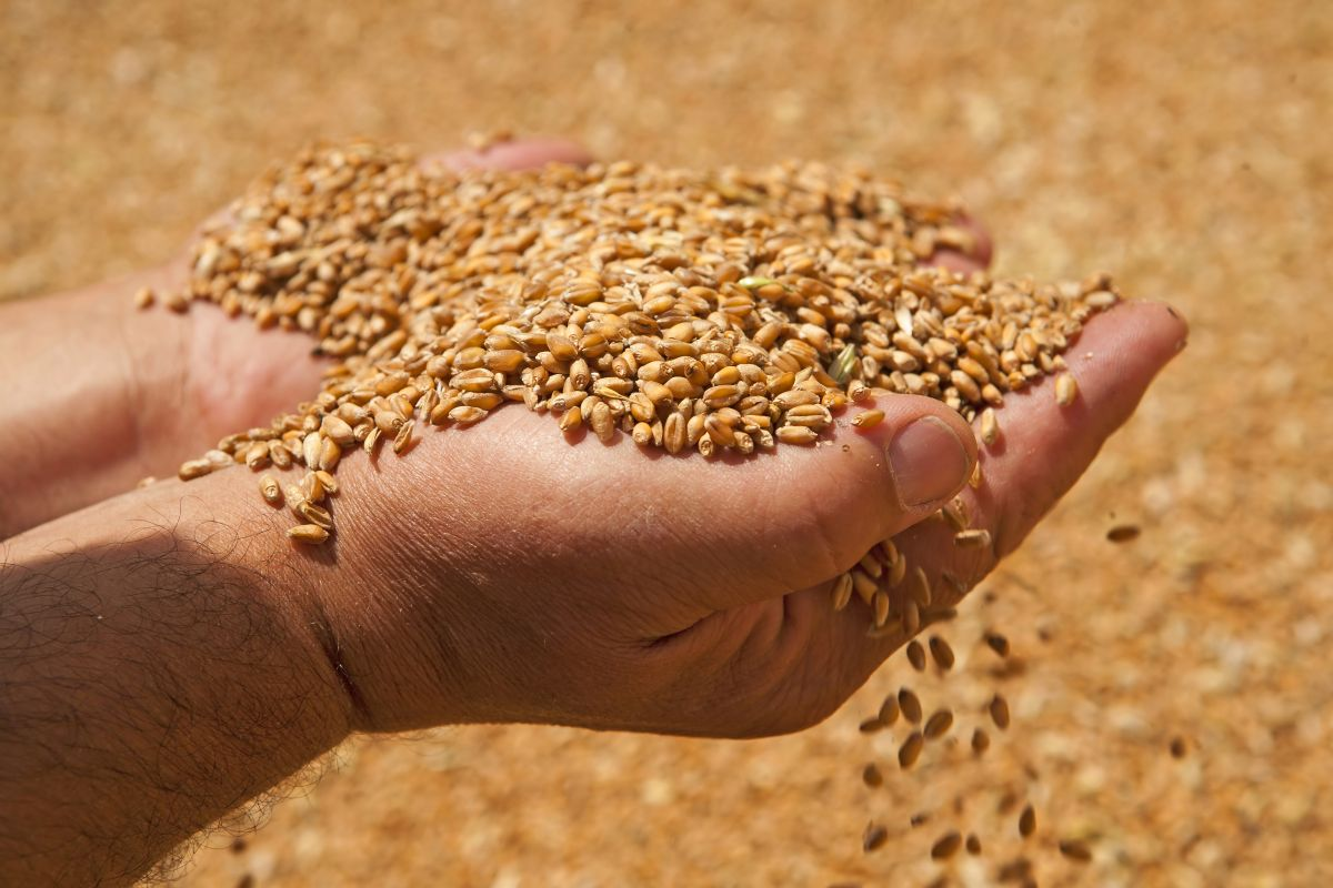 Farmers owed money by Wellgrain to get few pence in every pound