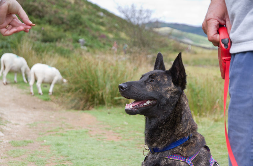 Pet owners are being urged to keep their dogs on leads at all times near sheep