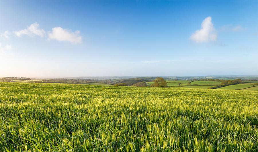 Farmland values dip as rural activity plateaus in first quarter
