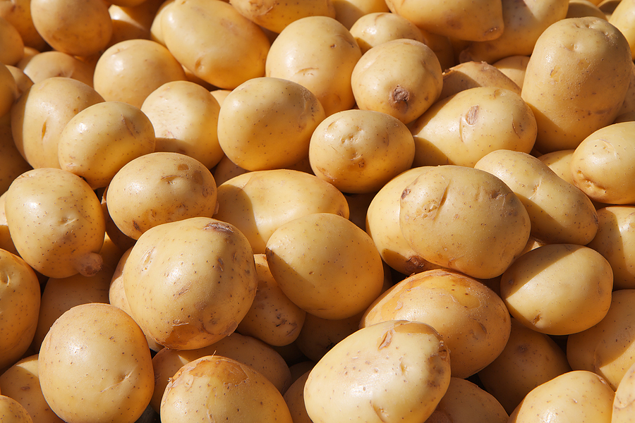 Potato stocks keep pace with 2015/16 season