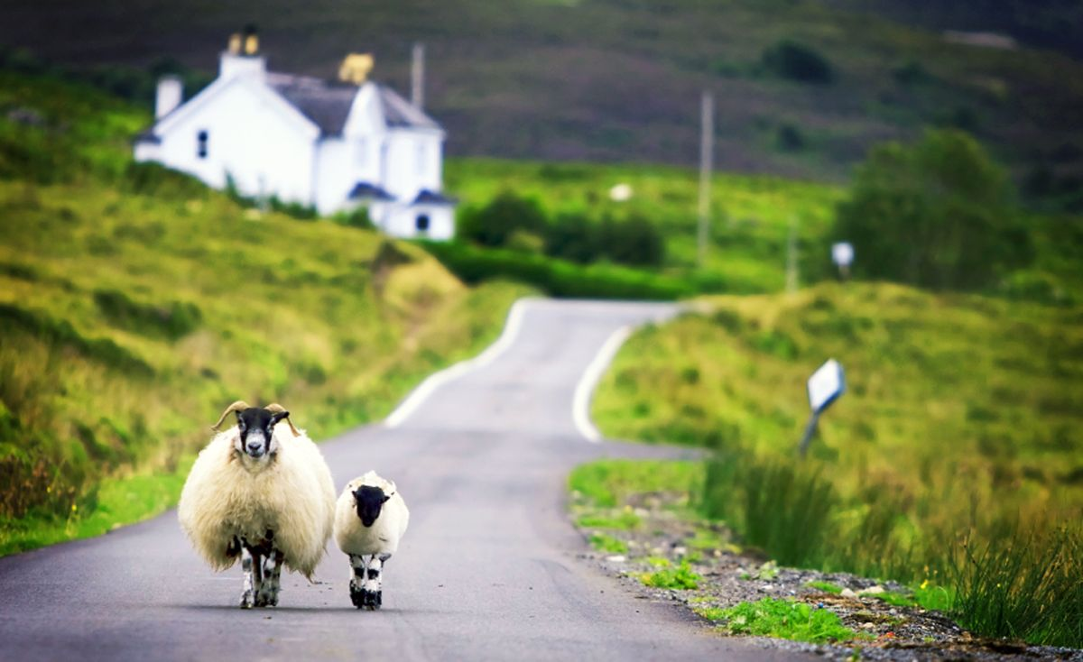 Scotland confirms £45m payments to isolated upland sheep farmers