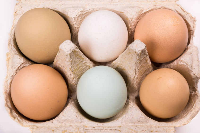 "The humble egg has been labelled as ""nature's multivitamin"" for its wide-ranging health benefits"