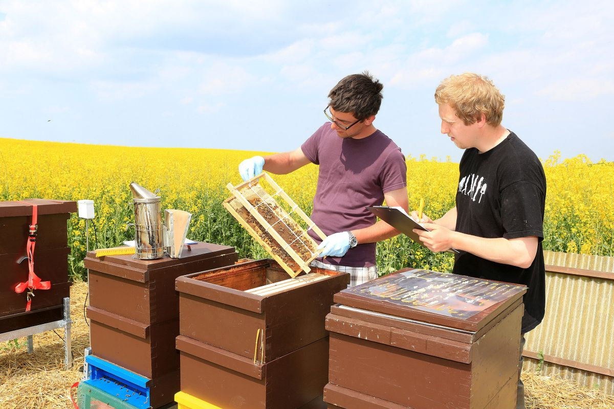 Beekeeping could be a fun way to diversify