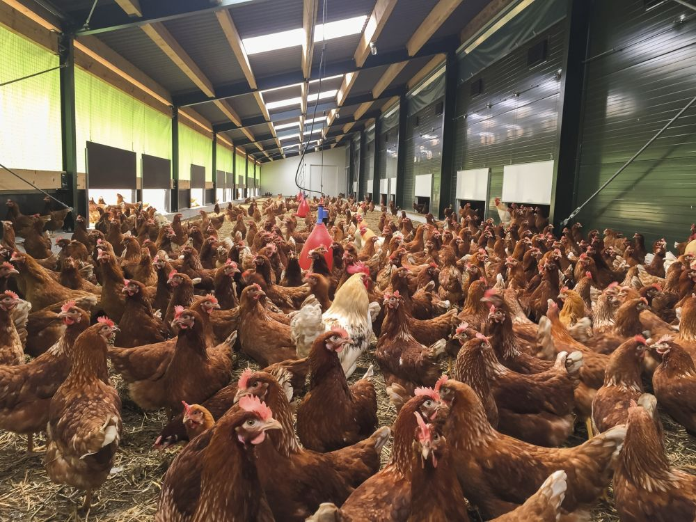 Industry body submits proposal for Europe to protect free range egg status